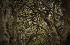 树干图片树木图片大树景观