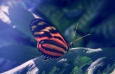 蝴蝶图片昆虫图片生物世界