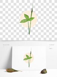 夏至半夏植物中草药古风纹理插画