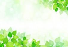 春天绿叶的模板