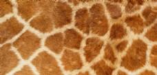 实物面料动物皮纹背景