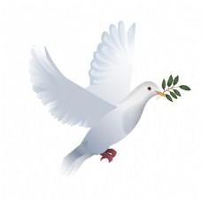 手绘鸽子和平鸽插画