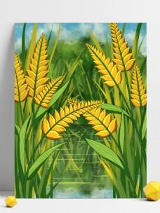 小满节气饱满的麦穗背景设计