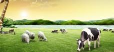 奶牛草原风景