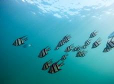 海底的灰色鱼群