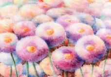 甜蜜的雏菊