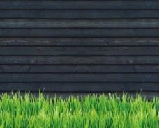 青草 木墙