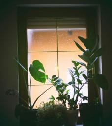 窗户和绿植