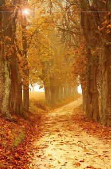 风景树林图