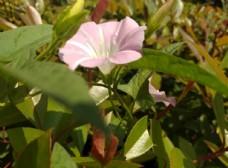 鲜花花朵花卉