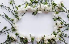白色康乃馨