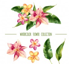 6款水彩绘花卉和叶子