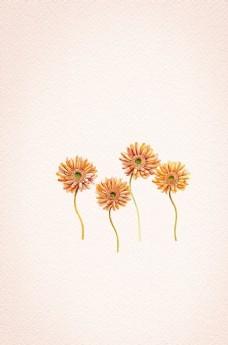 像谜语一样的野菊花