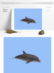 海洋海豚3d模型