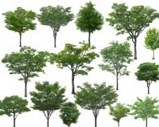 景观园林植物