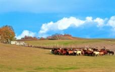 美丽的牧场