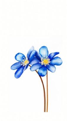 蓝色蝴蝶草