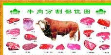 牛肉分割图