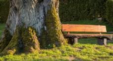 树桩树木树干大树图片素材