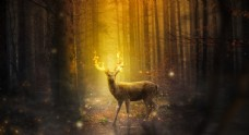 神鹿图片素材大自然森林图片素材
