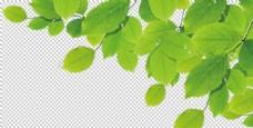 绿色叶子 透明背景