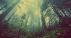 大自然森林图片素材神秘图片素材
