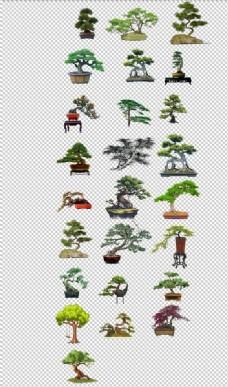 松树盆栽小松树盆景迎客松素材