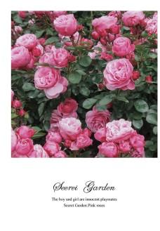 粉色玫瑰花