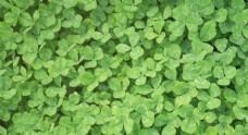 绿叶锦簇摄影