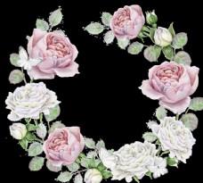 绿叶 花朵 玫瑰 白玫瑰