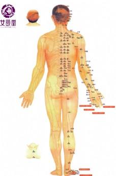 人体穴位图