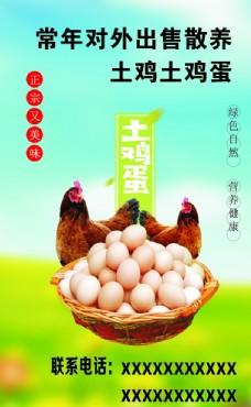 售卖土鸡土鸡蛋