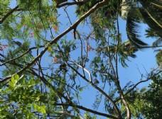 泰国甲米的天空