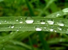 绿叶水滴唯美时刻