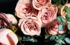 巧克力色玫瑰花