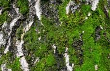 长苔藓的树皮素材