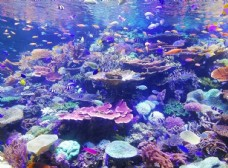 珊瑚上的鱼类学校