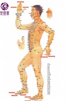 高清 人体穴位图