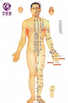 人体 穴位图