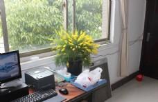 办公室菊花