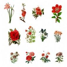 玫瑰花卡通手绘花花
