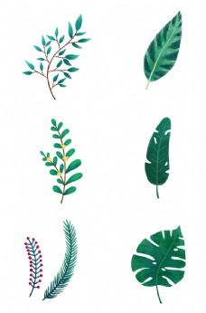 绿色树叶叶子