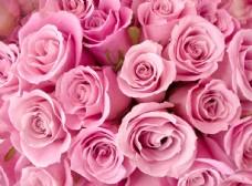 浪漫玫瑰花