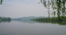 西湖垂柳阳春三月