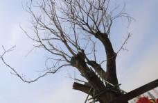 蓝天下的树干