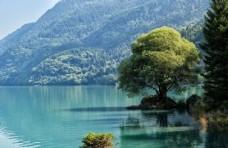一棵长在湖边的树