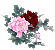 牡丹花 国花 花卉 包装设计