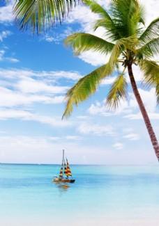 清凉一夏椰子树沙滩船帆