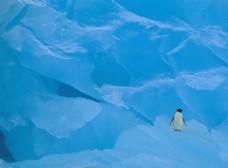 精选冰川企鹅风景