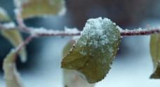 冬天雪景树枝